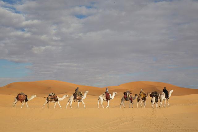 砂漠を旅するガードルード