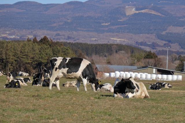 牧場の画像