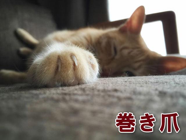 f:id:akira_kayou:20171009233054j:plain