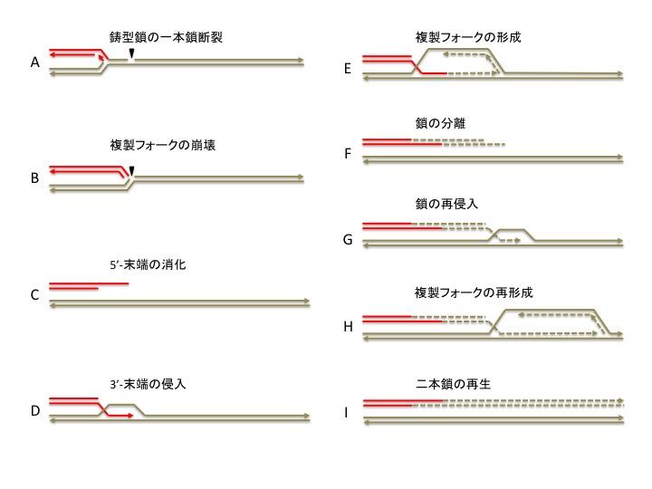 f:id:akirainoue52:20170324114931j:plain