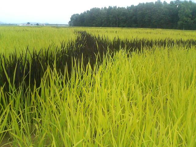 f:id:akirais:20100711145600j:image