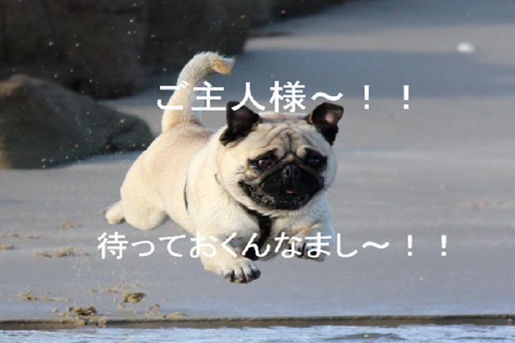 f:id:akirasan_comedy:20200613081212p:plain