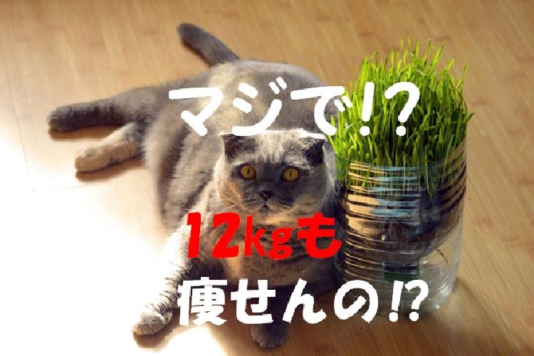 f:id:akirasan_comedy:20200616224616j:plain