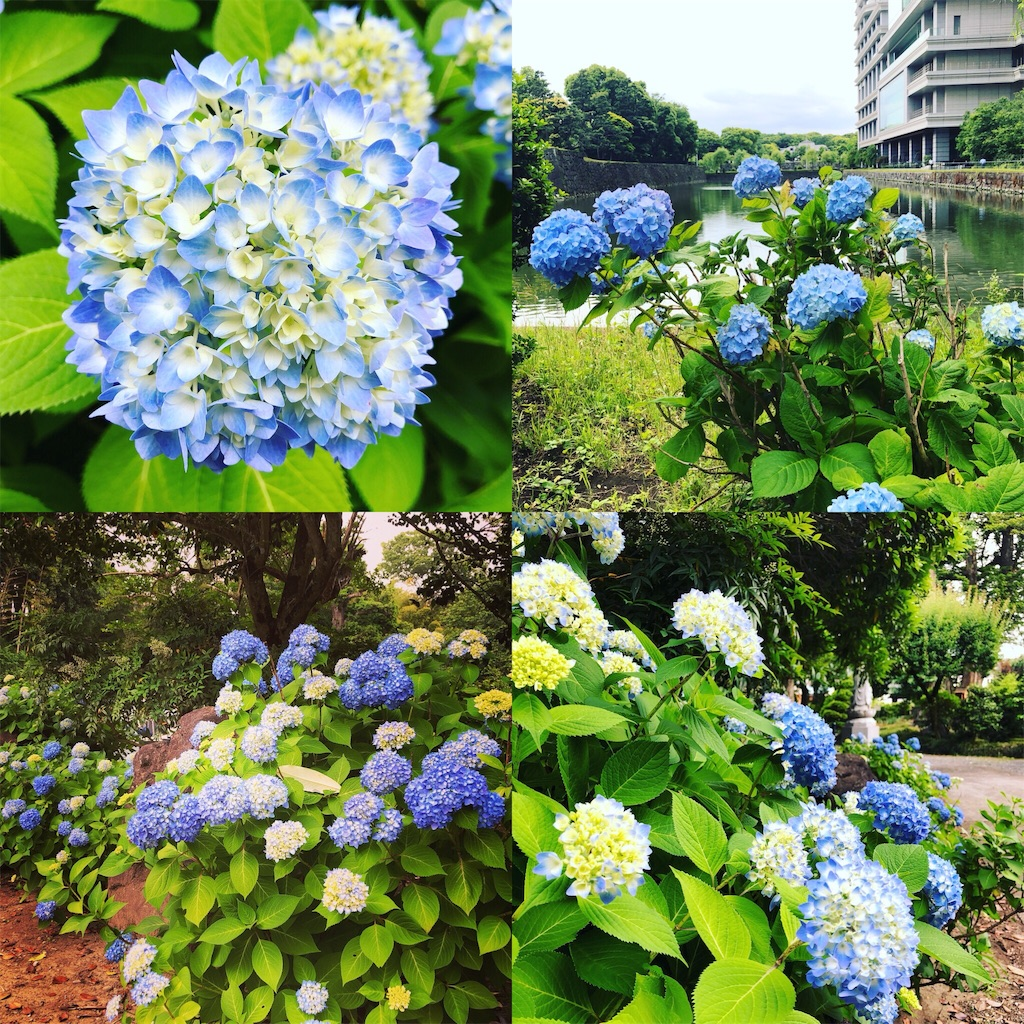 f:id:akiruno_life:20180527223640j:image