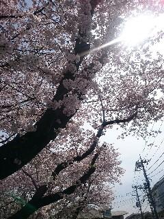 f:id:akisan01:20160406123403j:image