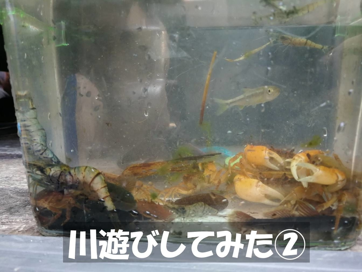 f:id:akita-inakagurashi:20210801140510j:plain