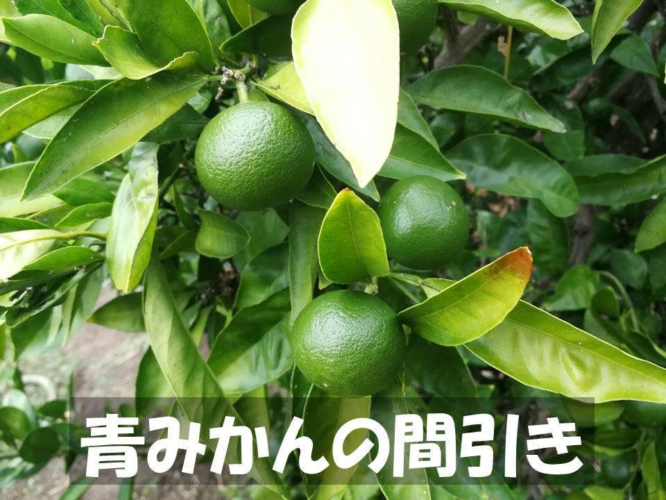 f:id:akita-inakagurashi:20210809184011j:plain