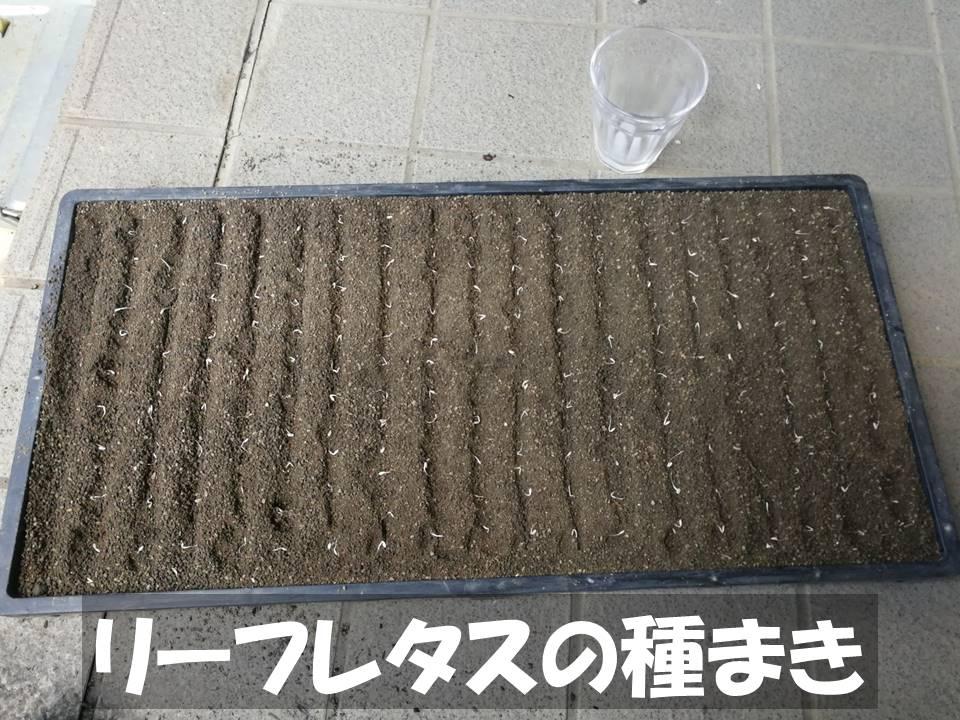 f:id:akita-inakagurashi:20210828073830j:plain