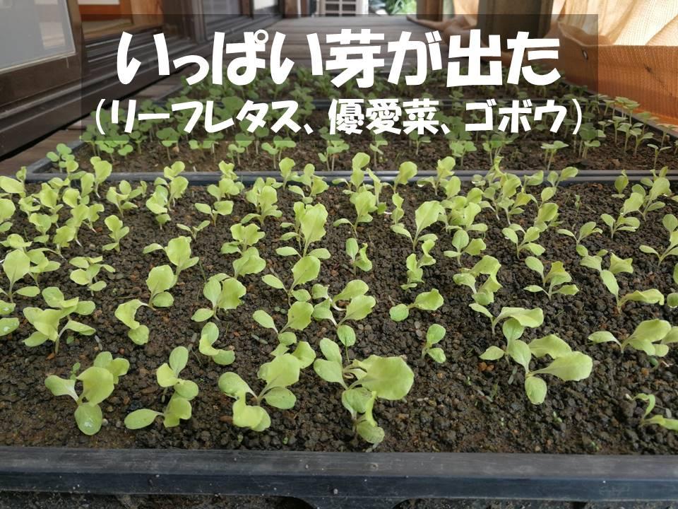 f:id:akita-inakagurashi:20210904143428j:plain