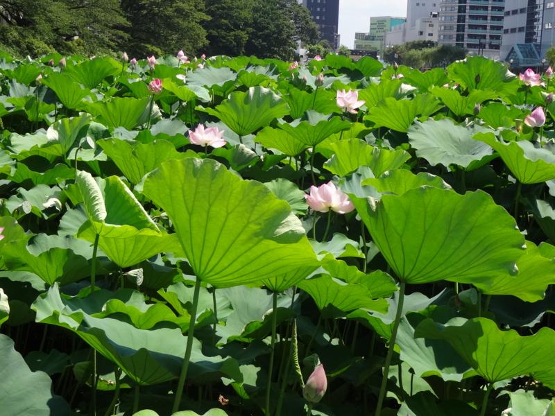 f:id:akita319:20120807202932j:image