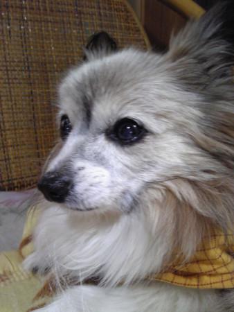 f:id:akito0526:20111211125500j:image