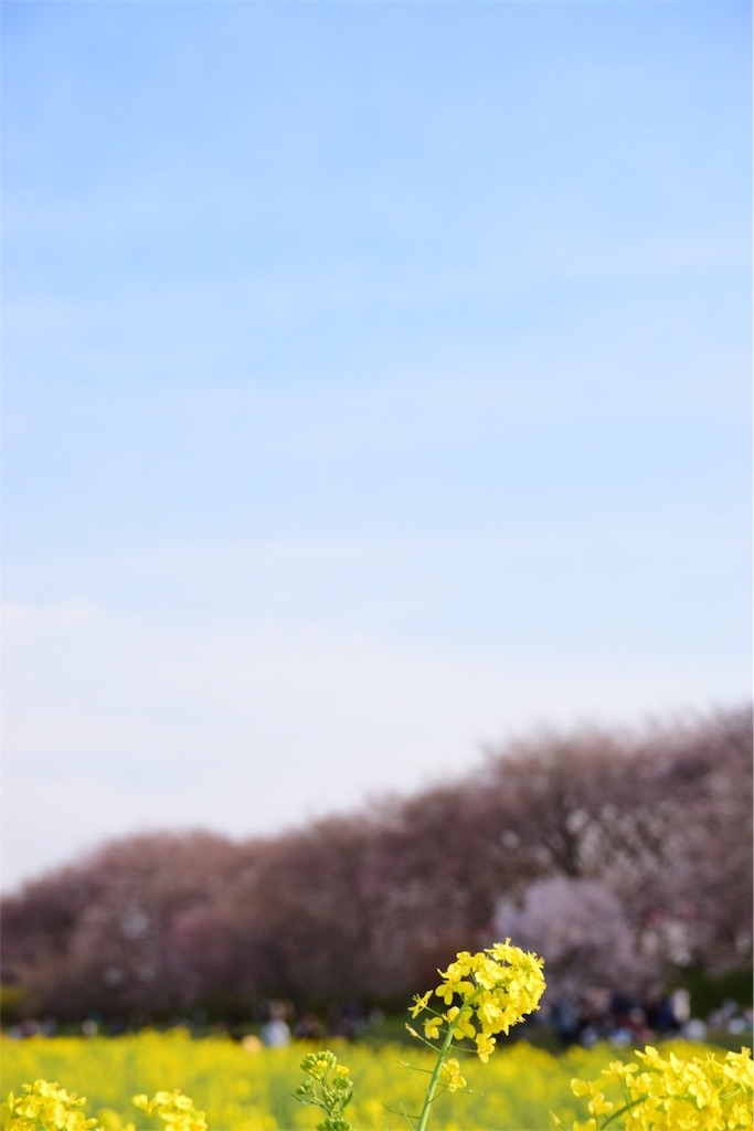 f:id:akiume926:20170406123209j:image