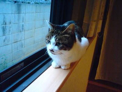 f:id:akiyochan15:20091216073030j:image