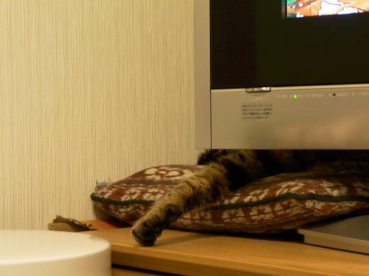 f:id:akiyochan15:20100318220729j:image