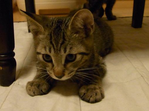 f:id:akiyochan15:20100711014340j:image