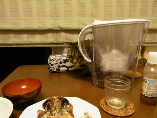 f:id:akiyochan15:20100728232731j:image