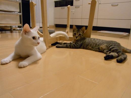 f:id:akiyochan15:20100821010554j:image