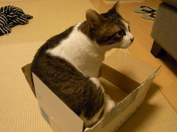 f:id:akiyochan15:20100822233904j:image