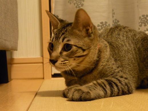 f:id:akiyochan15:20100826005428j:image