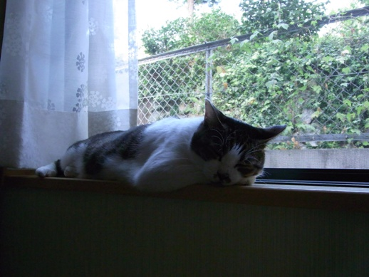 f:id:akiyochan15:20100901075347j:image