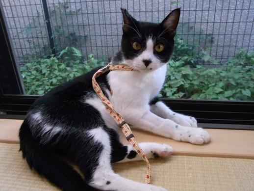 f:id:akiyochan15:20100916155741j:image