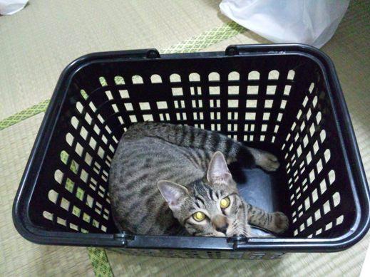 f:id:akiyochan15:20101012202847j:image