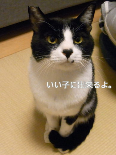 f:id:akiyochan15:20101020143501j:image