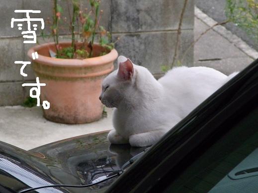 f:id:akiyochan15:20101024120526j:image