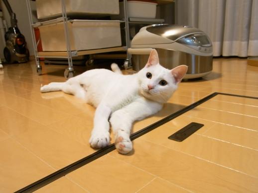 f:id:akiyochan15:20101124011006j:image:w400