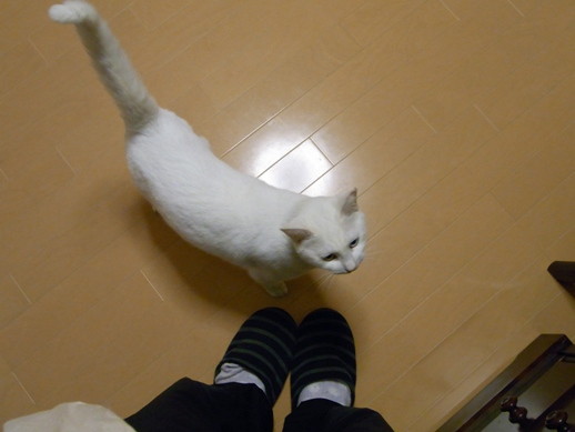 f:id:akiyochan15:20101201195213j:image
