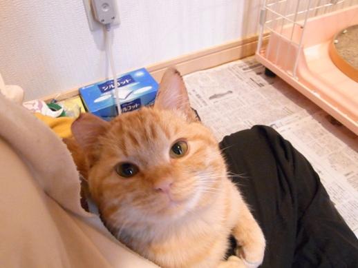 f:id:akiyochan15:20110106163802j:image:w350