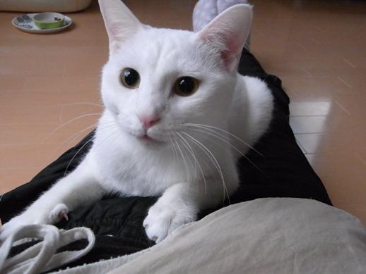 f:id:akiyochan15:20110210074127j:image:w360