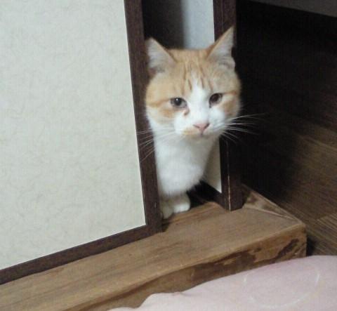 f:id:akiyochan15:20110214002900j:image:w360