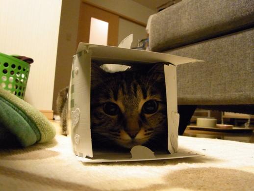 f:id:akiyochan15:20110218212730j:image