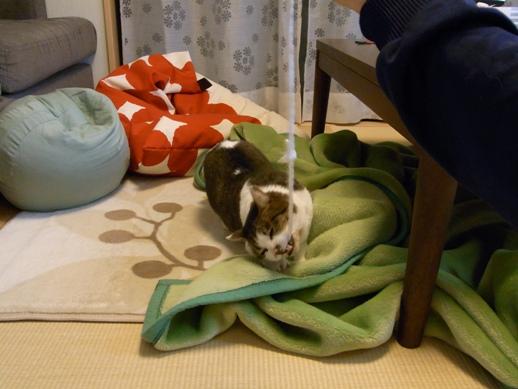 f:id:akiyochan15:20110321131917j:image