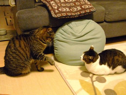 f:id:akiyochan15:20110424021324j:image