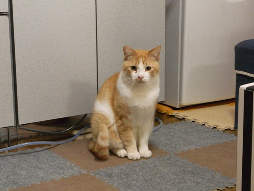 f:id:akiyochan15:20110501150318j:image