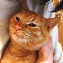 f:id:akiyochan15:20110531151144j:image