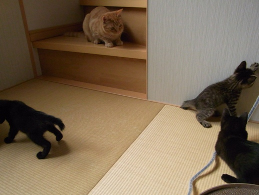 f:id:akiyochan15:20110604154700j:image