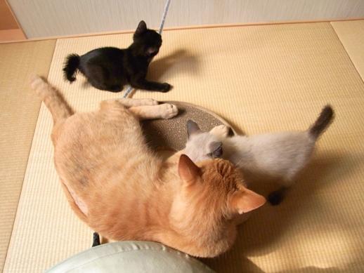 f:id:akiyochan15:20110604154859j:image