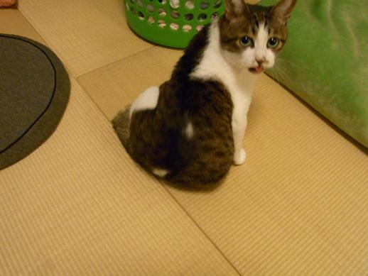 f:id:akiyochan15:20110610235051j:image