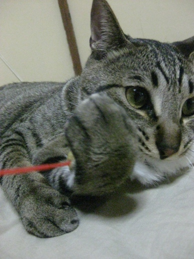 f:id:akiyochan15:20110626224559j:image:w360