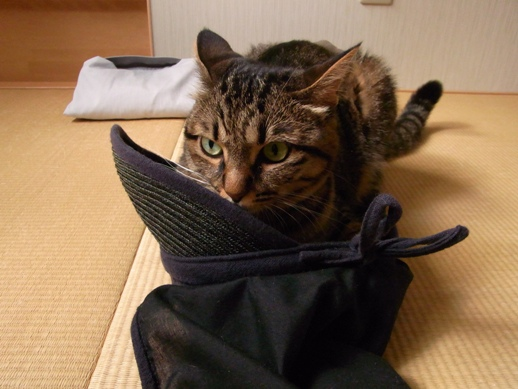 f:id:akiyochan15:20110709172050j:image