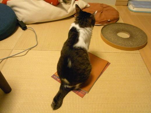 f:id:akiyochan15:20110718233304j:image