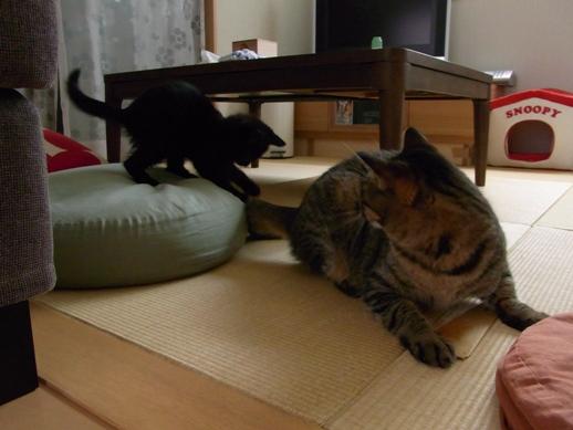 f:id:akiyochan15:20110724130354j:image