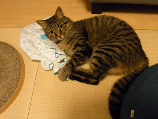 f:id:akiyochan15:20110730215751j:image:w500