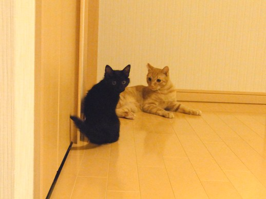 f:id:akiyochan15:20110802210108j:image