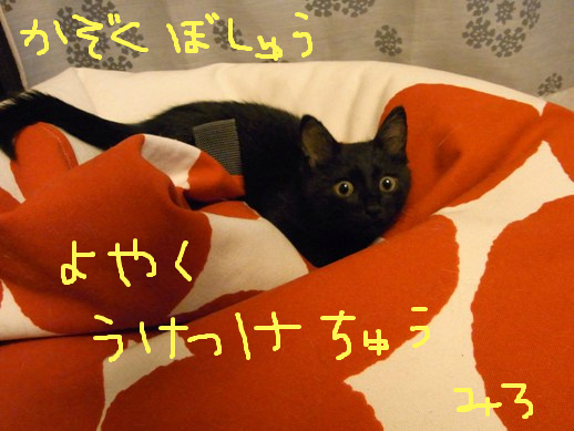 f:id:akiyochan15:20110806151342j:image