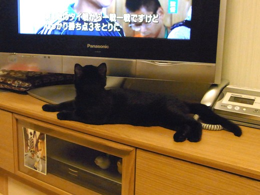 f:id:akiyochan15:20110829231551j:image