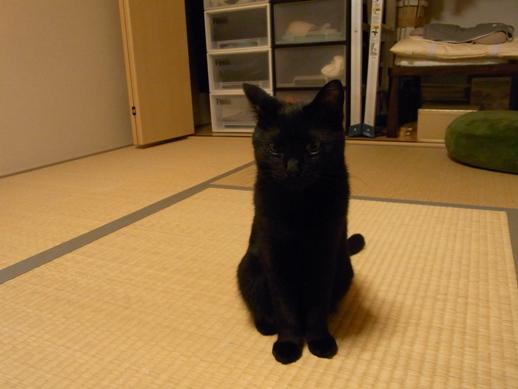 f:id:akiyochan15:20111017211227j:image